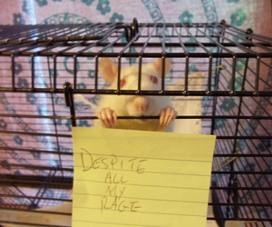 rat, smashing pumpkins, and rat in a cage image