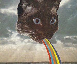cat, vintage, and grunge image