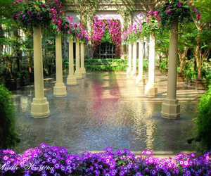 flowers, garden, and water image