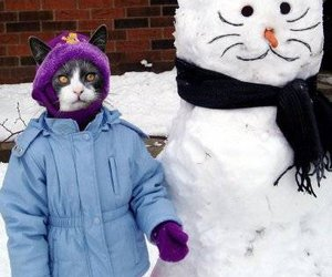 cat, funny, and snow image