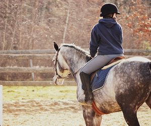 autumn, grey, and horse image