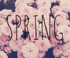 rose, pink, and spring image