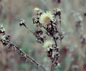 cold, nature, and flower image
