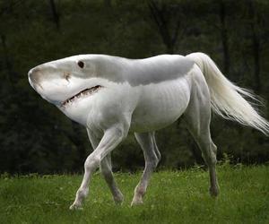 shark, horse, and animal image