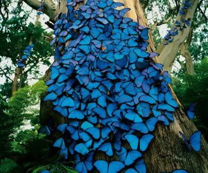butterflies, blue, and forest image