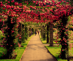 green, jardin, and sun image