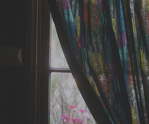 photography, flowers, and window image