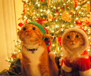 cats, christmas, and cute image