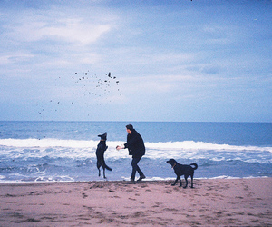dog, sea, and friends image