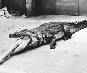 crocodile, helmut newton, and black and white image