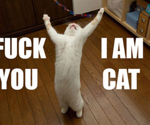 cat, quotes, and lol image