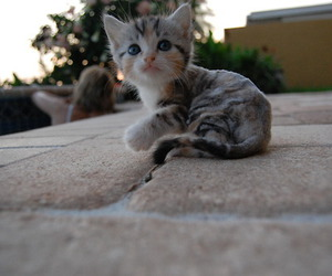 cat, adoreable, and kitten image