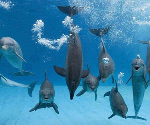 animal and dolphin image
