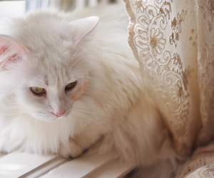 cat, soft, and white image