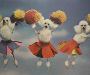 poodle image