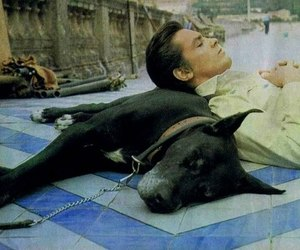 Alain Delon, terence hill, and il gattopardo image