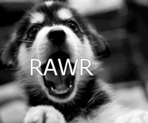 dog, rawr, and cute image