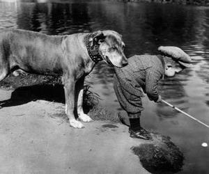 dog, friends, and animal image