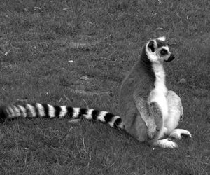 animal and black and white image