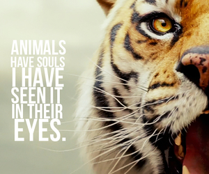 animal, tiger, and soul image