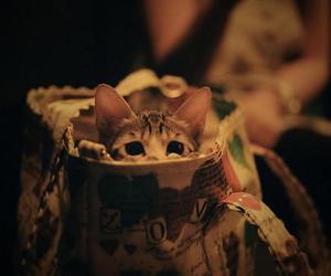 cat, cute, and bag image