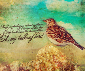 bird, Lyrics, and dcfc image