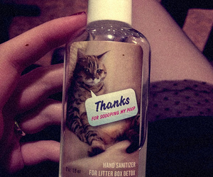 cat, poop, and cute image