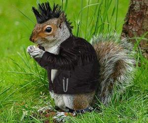 cool, squirrel, and amimal image