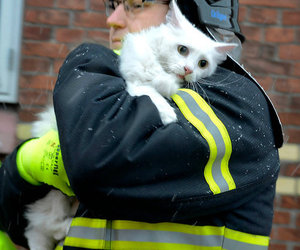 aww, rescue, and cat image
