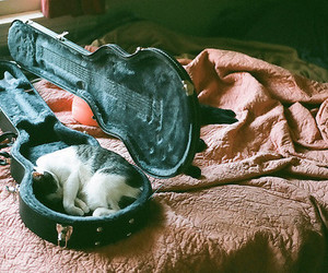 cat, guitar, and bed image