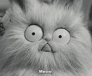 cat, meow, and frankenweenie image