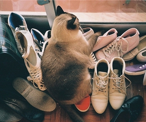 cat, shoes, and indie image