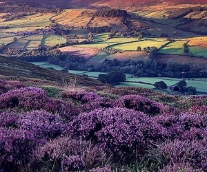 england, flowers, and nature image