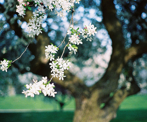 vintage, flowers, and nature image
