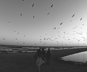 birds, beach, and black and white image