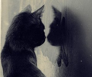 cat, black, and mirror image