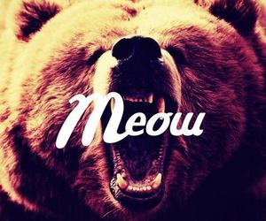meow, bear, and text image
