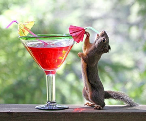 drink, animals, and squirrel image