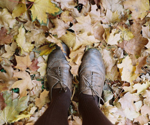 leaves and shoes image