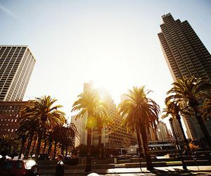 city, palms, and sun image