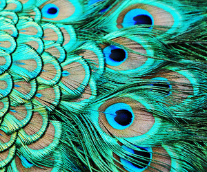 peacock, feather, and green image