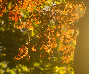 2012, afternoon, and autumn image