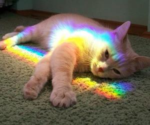 animal, rainbow, and white cat image