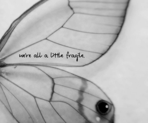 butterfly, fragile, and quotes image