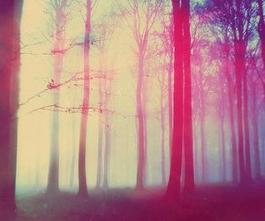 forest, tree, and hipster image