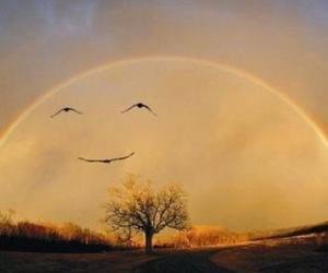 bird, smile, and rainbow image