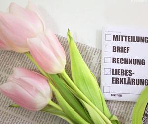 deutsch, tulpen, and german image