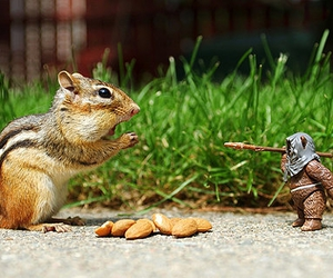 squirrel, animal, and star wars image