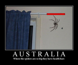 spider, australia, and funny image