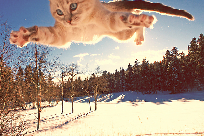 blue eyes, snow, and cat image